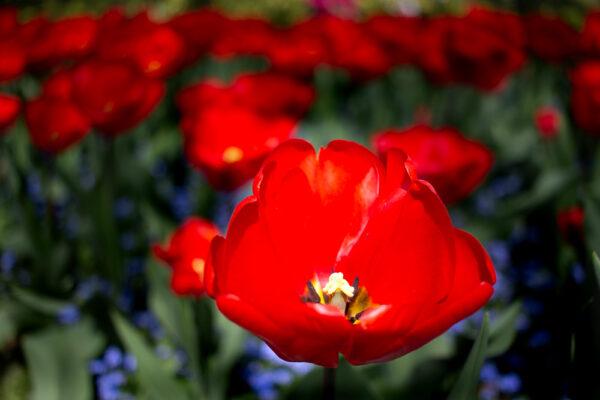 maliceph_portfolio_fiori_e_viaggi_1