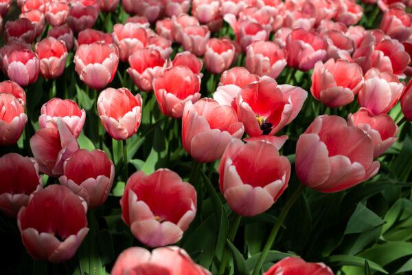 maliceph_portfolio_fiori_e_viaggi_4