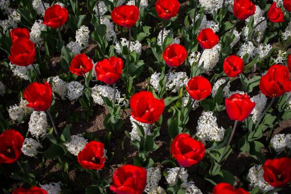 maliceph_portfolio_fiori_e_viaggi_7