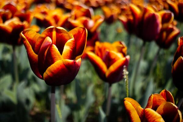 maliceph_portfolio_fiori_e_viaggi_9